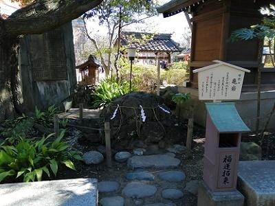 chiba_kameiwa.jpg